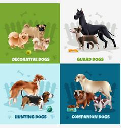 dog breeds design concept vector image