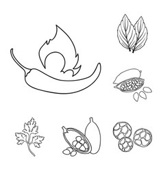 herb and spices outline icons in set collection vector image