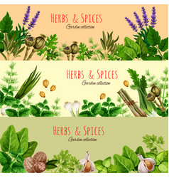 Herbs spices and condiments cartoon banner set vector