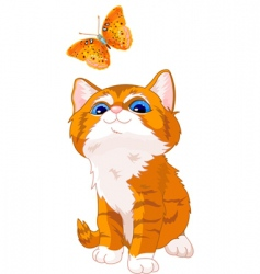 kitten looking at butterfly vector image