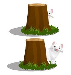 Least weasel or mustela nivalis hides behind a vector