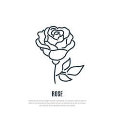 rose line icon flower symbol liner style vector image