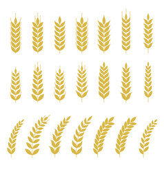 set of wheat or barley icon vector image