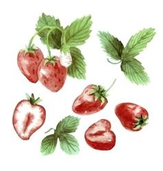 Watercolor set strawberry drawing vector image vector image