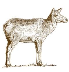 etching deer vector image vector image