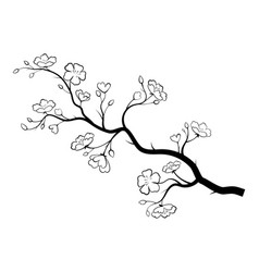 blooming cherry sakura branch with flower buds vector image