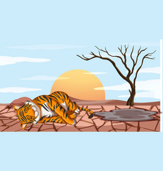 deforestation scene with tiger dying from drought vector image