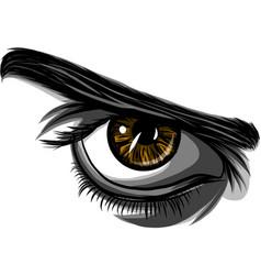detailed female eyes with long eyelashes vector image