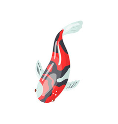 Shova carp koi fish traditional sacred japanese vector