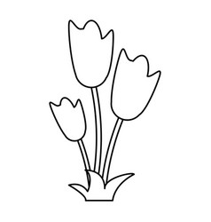 Women day tulip bunch flower thin line vector