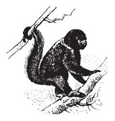 Wooly monkey vintage vector