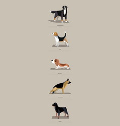 dog breeds in minimalist style vector image