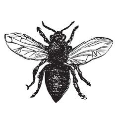 Worker bee vintage vector