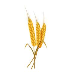 Three ears wheat ears bunch icon cartoon style vector