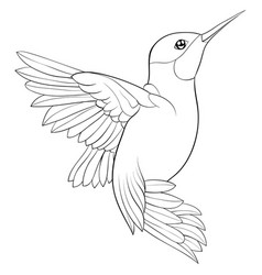 Adult coloring bookpage a cute hummingbird image vector