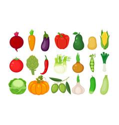 big set of different vegetables vector image