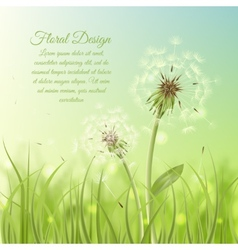 Floral design poster of dandelion vector