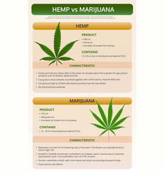 Hemp vs marijuana vertical textbook infographic vector
