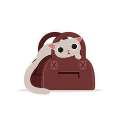 Lovely funny white cat in a brown bag home pet vector