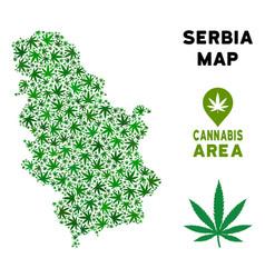 Marijuana collage serbia map vector