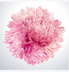 pink asters and chrysanthemums sphere vector image