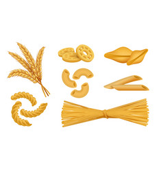 Realistic macaroni italian pasta types noodles vector