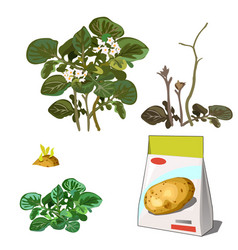 Set stages life a agricultural plant vector