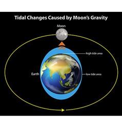 Tidal changes vector image