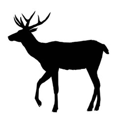 decoration elegance horned object shadow buck doe vector image