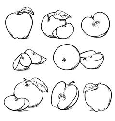 Apple with leaf Hand drawn sketch style fruits vector image
