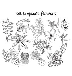 collection of hand drawn tropical flowers leaves vector image