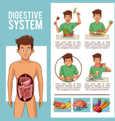 Digestive system infographic vector