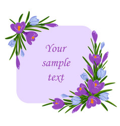 frame for text with crocus flowers decoration vector image