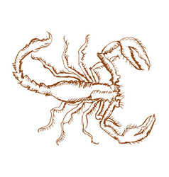 monochrome sketch of scorpion vector image