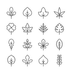 set line icons of leaf vector image