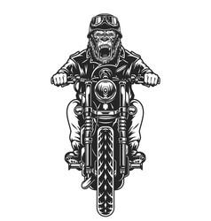 Vintage angry gorilla head biker vector