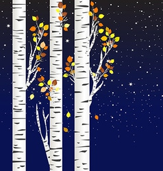 Birch trees in the autumn over a starry night vector image