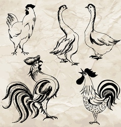 Birds02 vector image