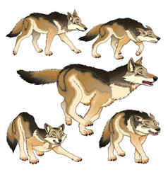 Group of isolated wolves vector