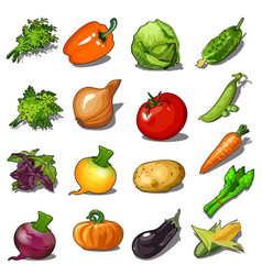 set ripe vegetables isolated on white vector image
