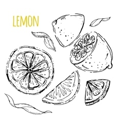 The drawn set of lemons vector image