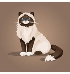 Sitting cat vector image