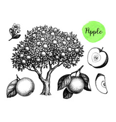 Apple sketch set vector