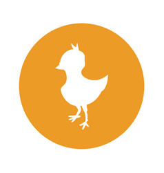 Chick round icon vector