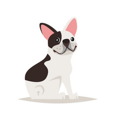 cute french bulldog dog vector image