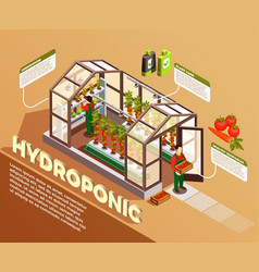Hydroponic isometric composition vector