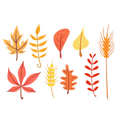 simple flat autumn leaves set vector image