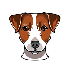 jack russell dog vector image