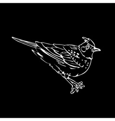 Hand-drawn pencil graphics lark sparrow vector