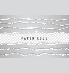 horizontal torn paper edge ripped squared vector image